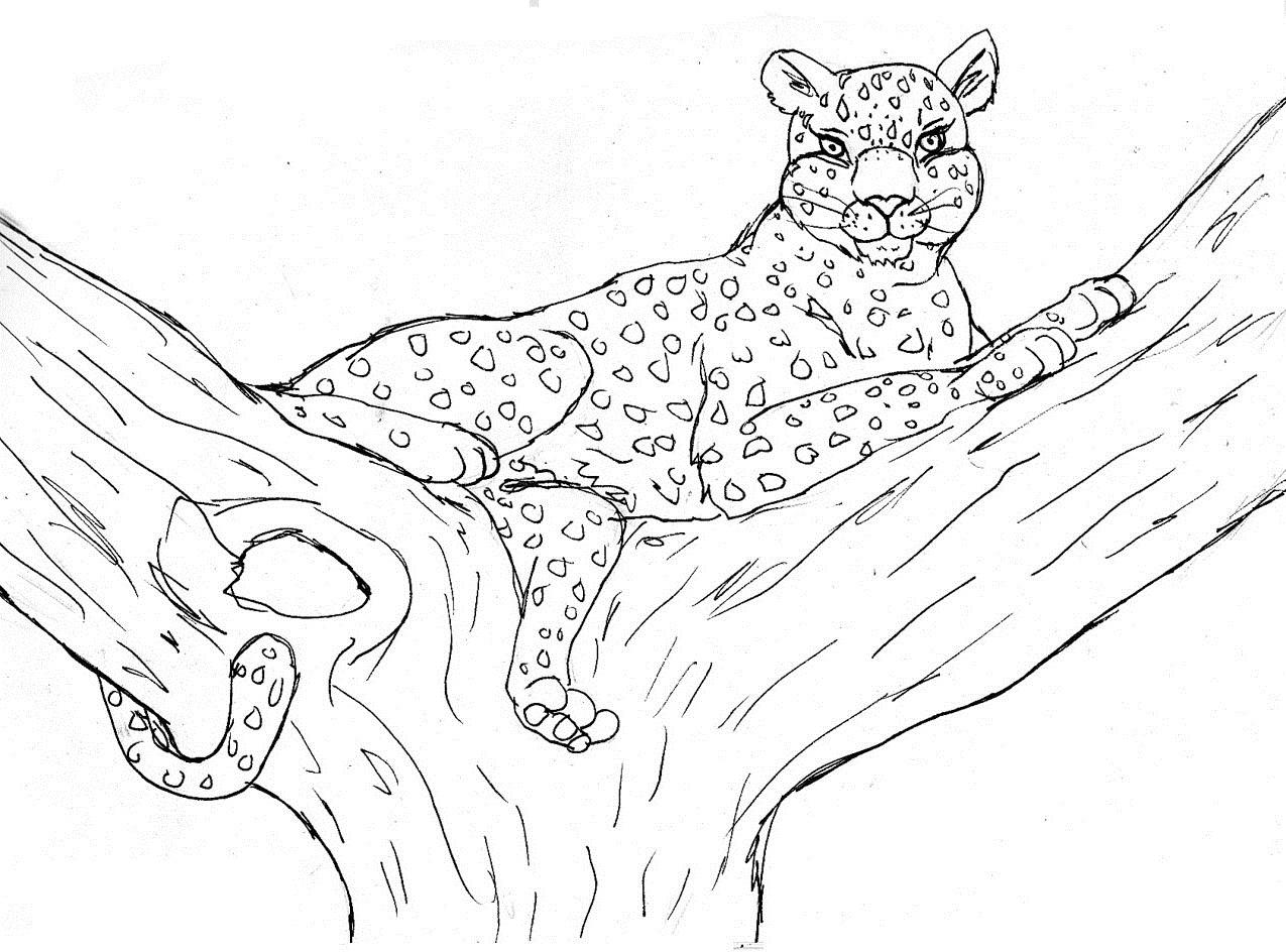 cheetah colouring page free printable cheetah coloring pages for kids cheetah colouring page
