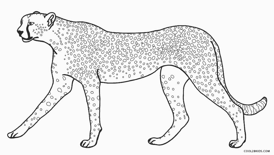 cheetah colouring page printable cheetah coloring pages for kids cool2bkids cheetah page colouring
