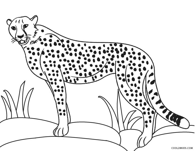 cheetah colouring page printable cheetah coloring pages for kids cool2bkids page colouring cheetah