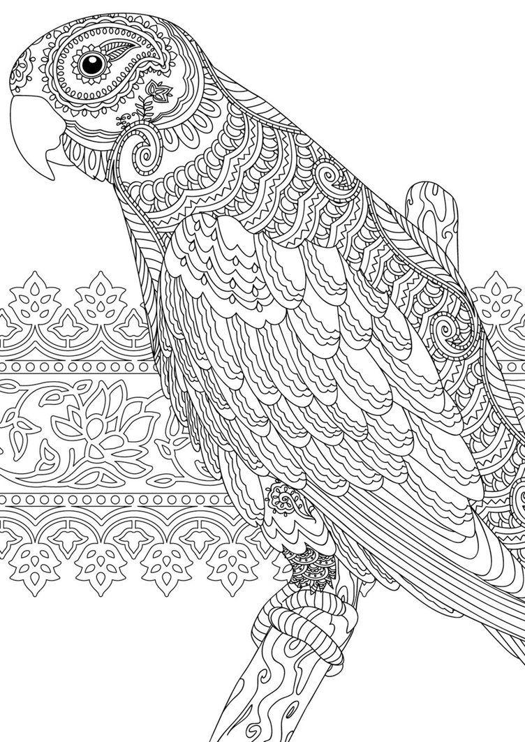 coloring book for adults souq zentangle colouring page for redan39s calm colour create souq book for coloring adults