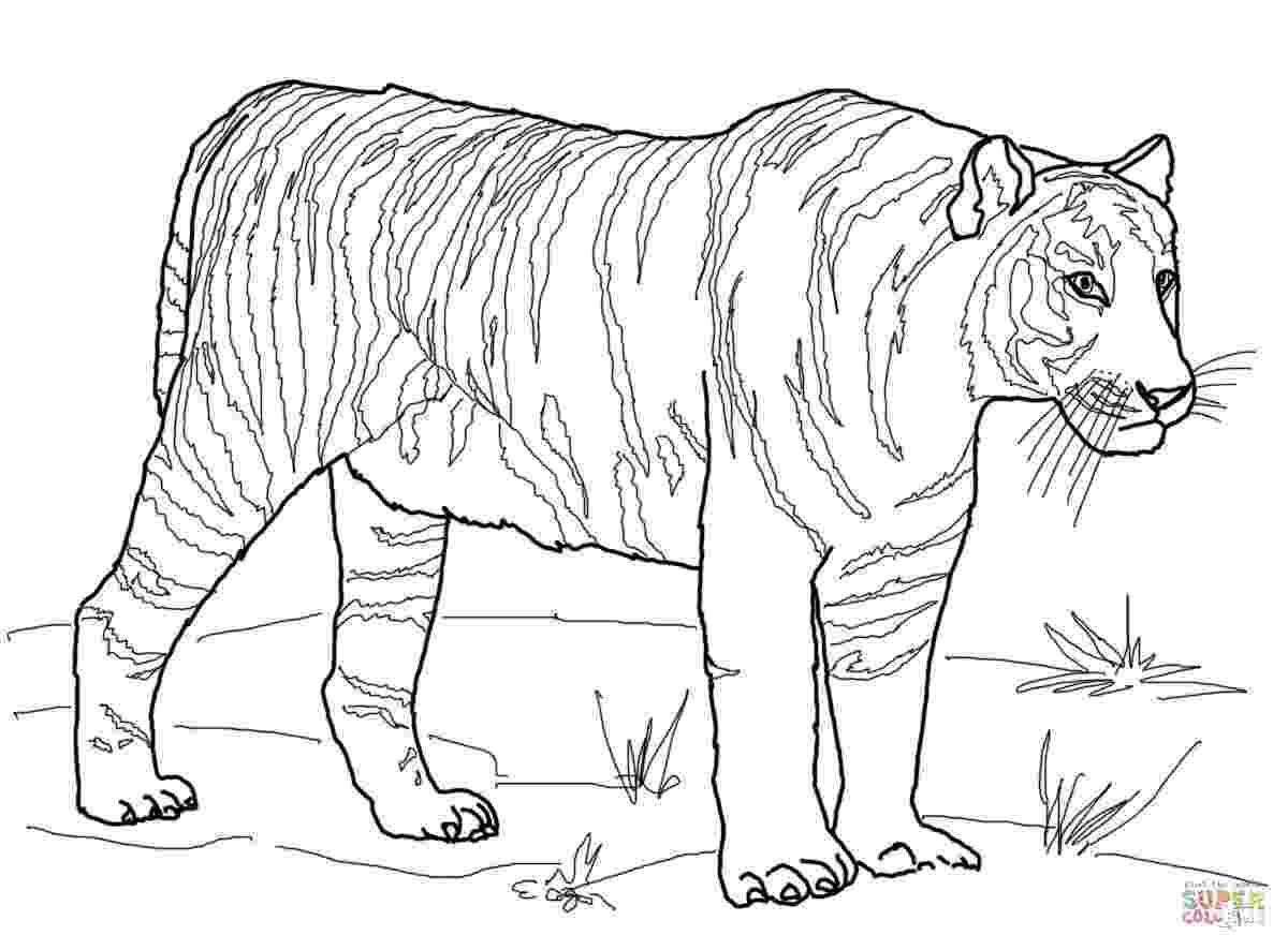 coloring book tiger free printable tiger coloring pages for kids coloring book tiger 1 2