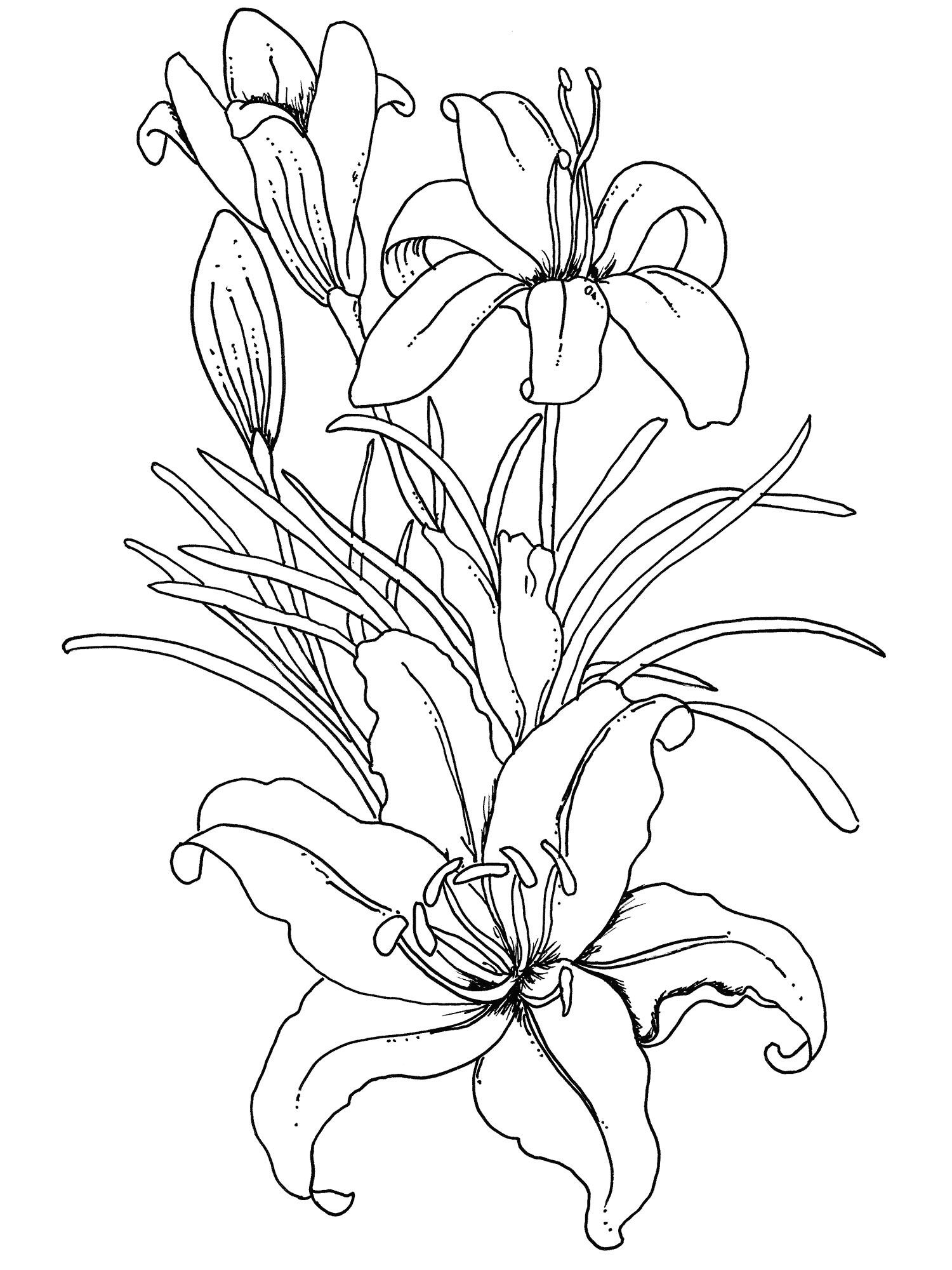 coloring books for adults flowers free printable flower coloring pages for kids cool2bkids flowers coloring books for adults