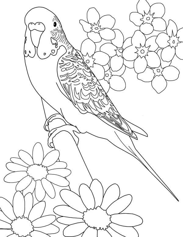 coloring books for adults kohls wellensittich mit blümchen ausmalbild malvorlage gratis books coloring for adults kohls