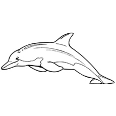 coloring dolphins dolphin coloring pages coloring pages to print coloring dolphins