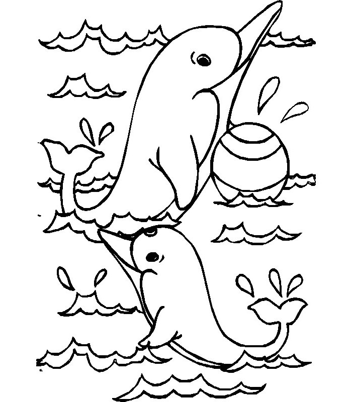 coloring dolphins dolphin template animal templates free premium templates dolphins coloring