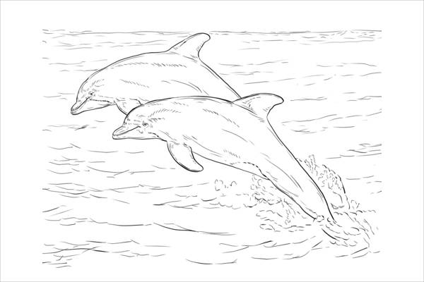 coloring dolphins leaping dolphins worksheet educationcom dolphins coloring