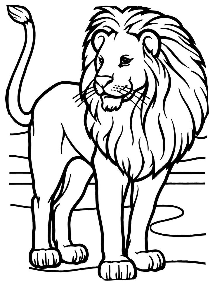 coloring page of a lion 3 printable pages for coloring for lion lovers coloring etsy coloring lion of page a