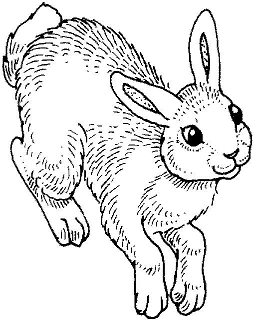 coloring pages bunny dawn reader hippity hop hop bunny pages coloring
