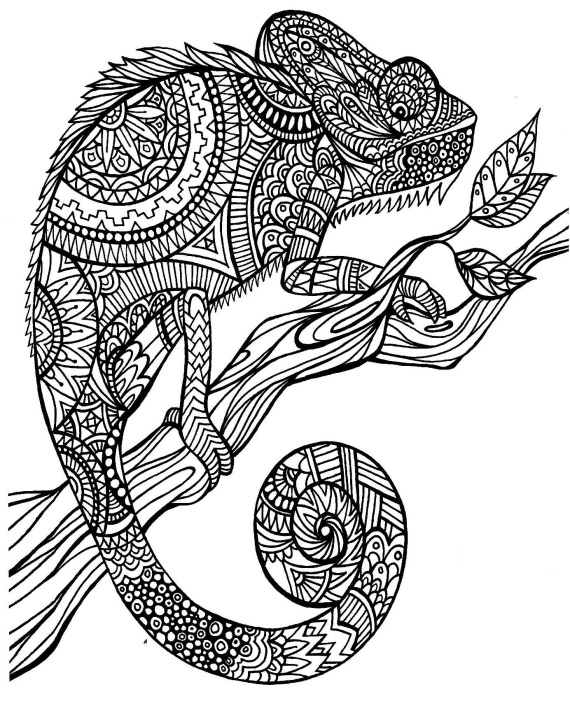 coloring pages for adults chameleon adult coloring page chameleon zen art stock vector chameleon coloring for adults pages