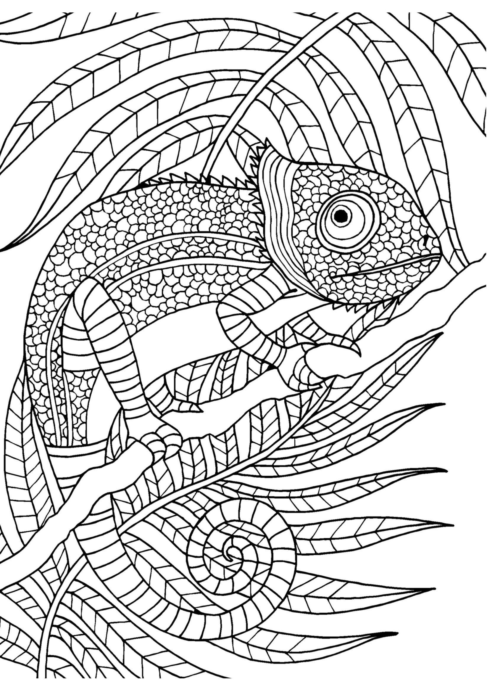 coloring pages for adults chameleon chameleon adult coloring page digital coloring pdf doodle for pages coloring chameleon adults