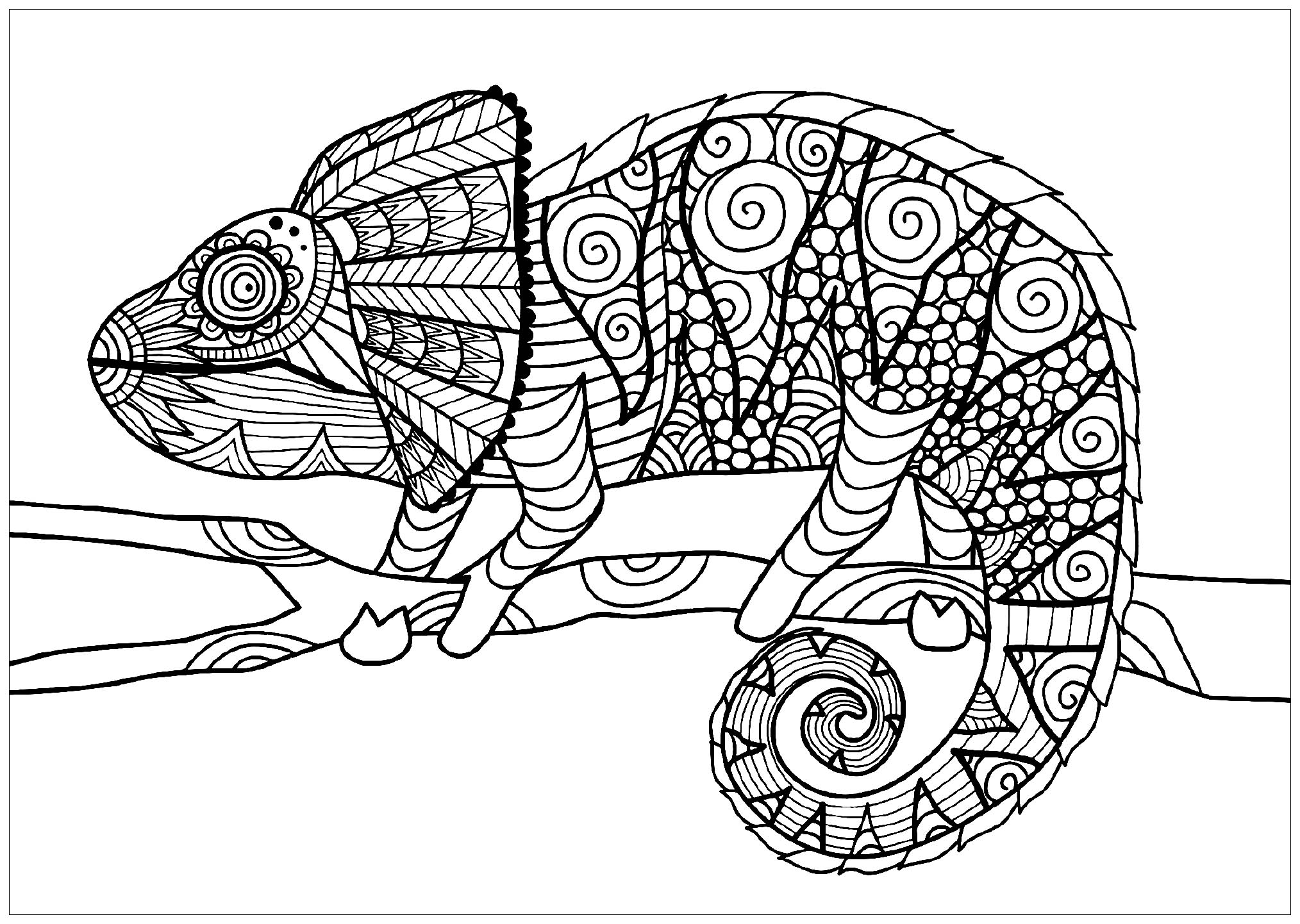 coloring pages for adults chameleon chameleon adult colouring page colouring in sheets art chameleon pages for adults coloring