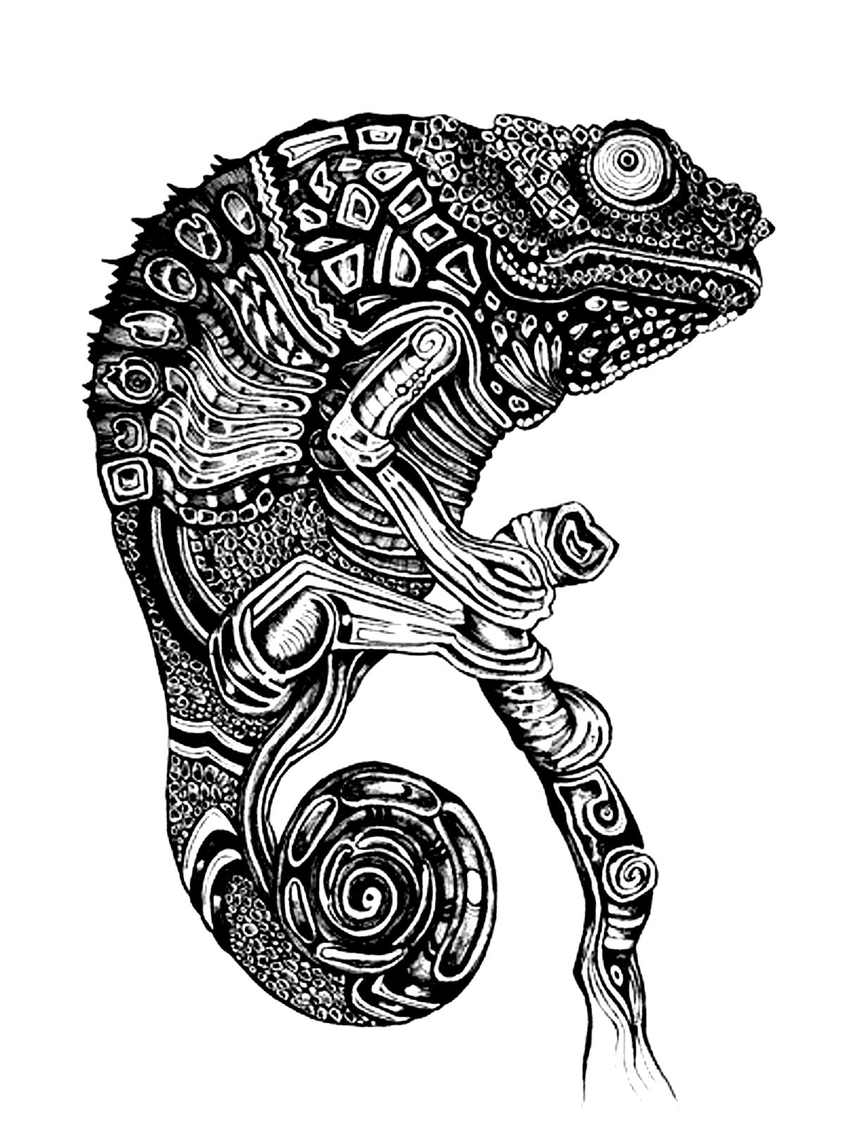 coloring pages for adults chameleon chameleon stock vectors vector clip art shutterstock adults for chameleon pages coloring