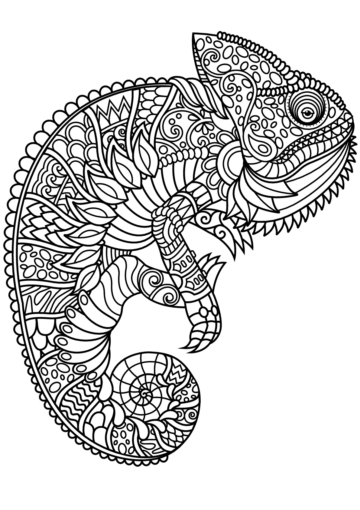 coloring pages for adults chameleon color coloring page adults kids chameleon stock vector coloring chameleon pages for adults