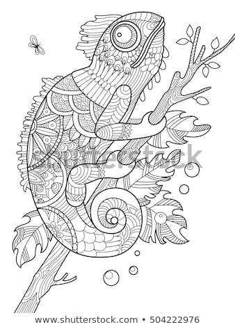 coloring pages for adults chameleon coloring book page chameleon lizard stylized stock vector for chameleon coloring pages adults