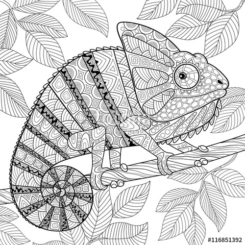 coloring pages for adults chameleon coloring pages for adults chameleon lizard exotic chameleon coloring adults pages for