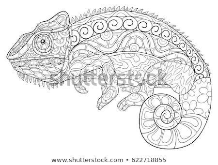 coloring pages for adults chameleon quotchameleon adult antistress coloring page black and chameleon for adults pages coloring