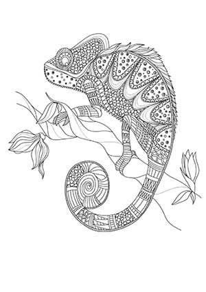 coloring pages for adults chameleon set of zentangle style chameleons stock vector image adults chameleon for coloring pages