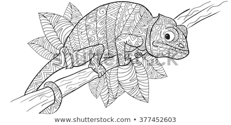 coloring pages for adults chameleon zentangle stylized chameleon stock vector illustration coloring pages for chameleon adults