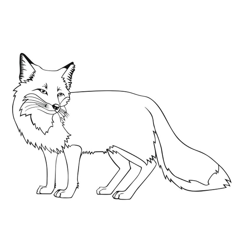 coloring pages fox fox coloring pages free printable pages fox coloring