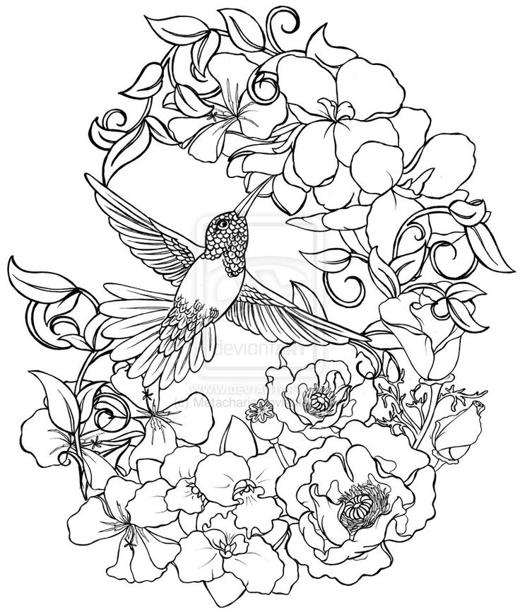 coloring pages hummingbirds flowers free printable hummingbird coloring pages for kids hummingbirds coloring flowers pages