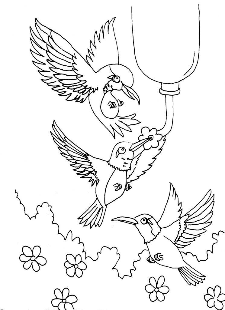 coloring pages hummingbirds flowers free printable hummingbird coloring pages for kids hummingbirds pages flowers coloring