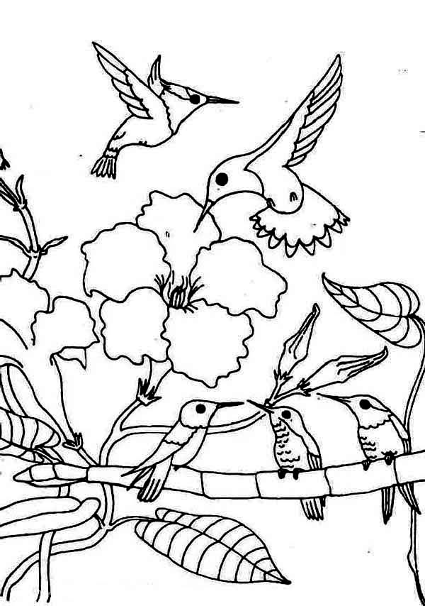coloring pages hummingbirds flowers hummingbird and flower drawing at getdrawingscom free hummingbirds pages coloring flowers