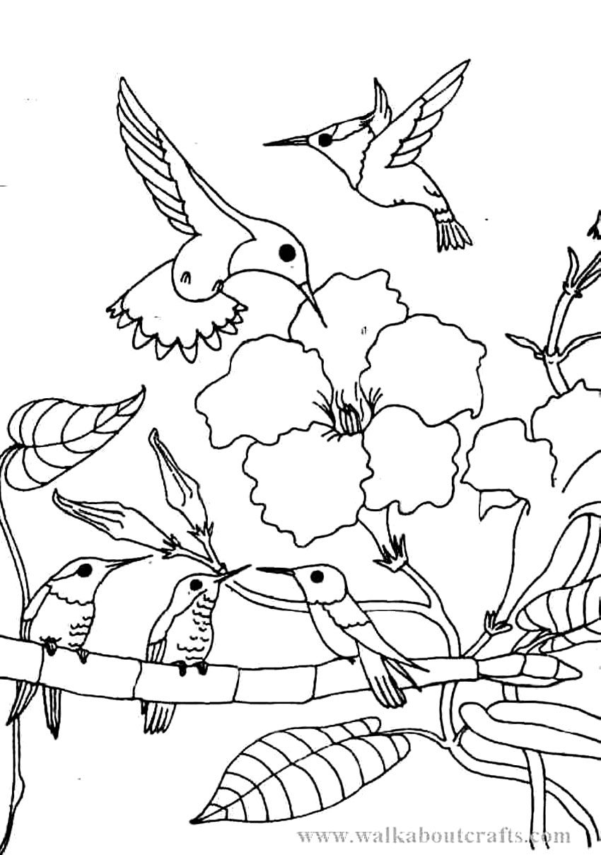 coloring pages hummingbirds flowers hummingbird coloring pages flowers hummingbirds coloring pages