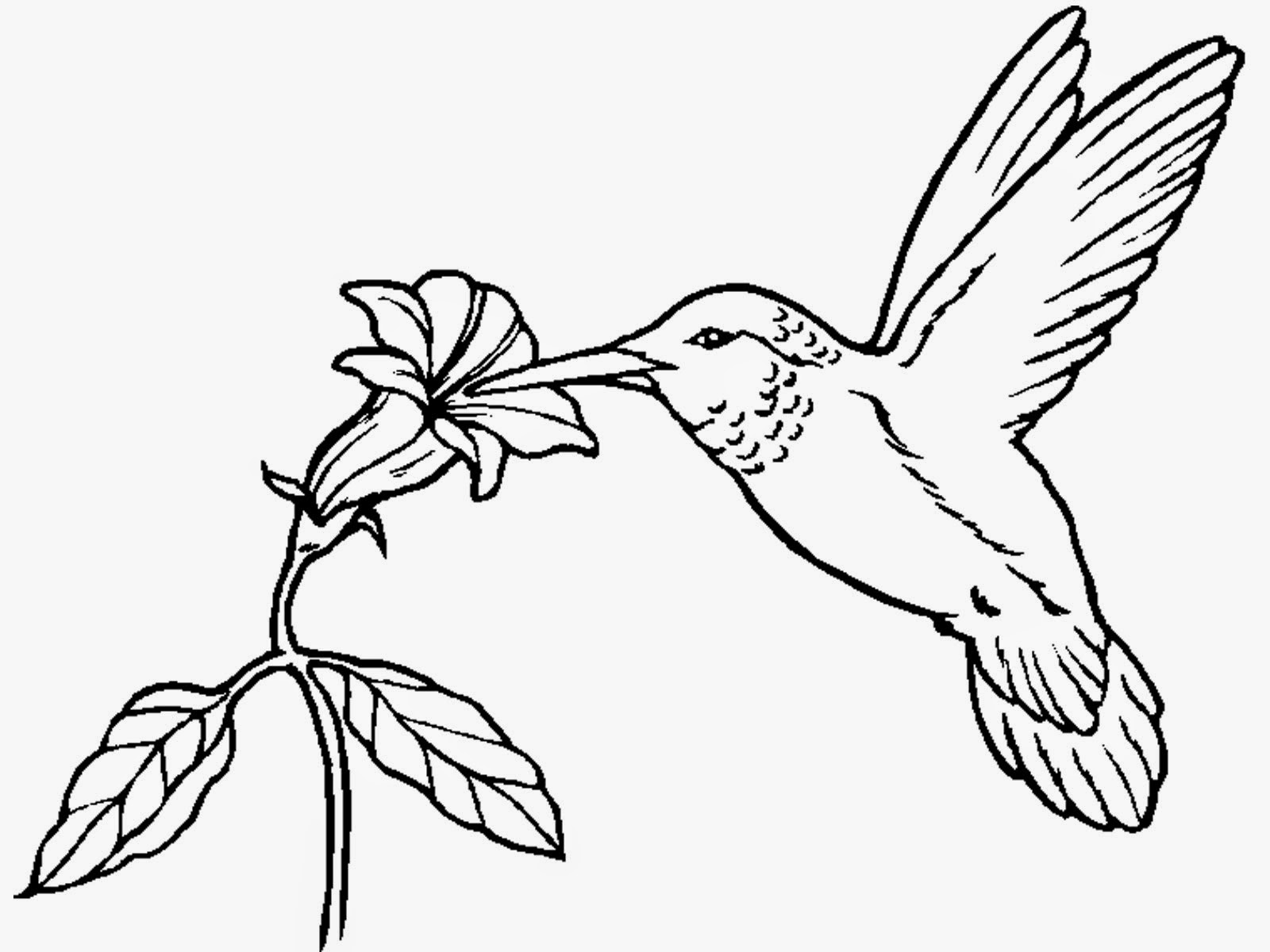 coloring pages hummingbirds flowers hummingbird coloring pages printable at getcoloringscom pages coloring hummingbirds flowers