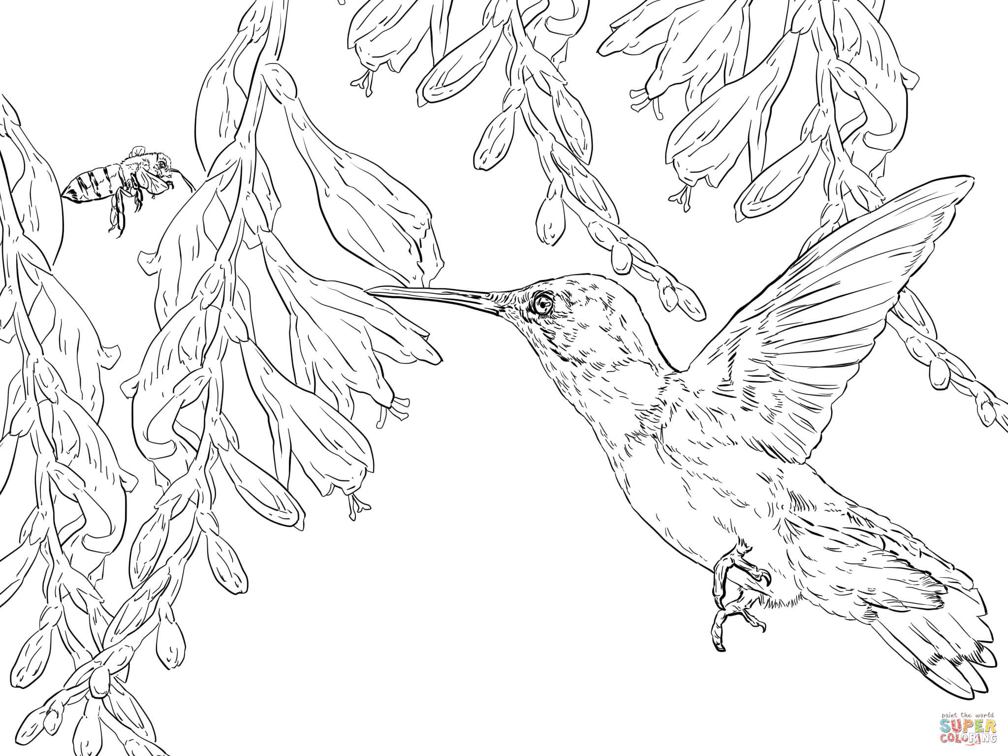 coloring pages hummingbirds flowers hummingbird coloring pages team colors flowers pages hummingbirds coloring