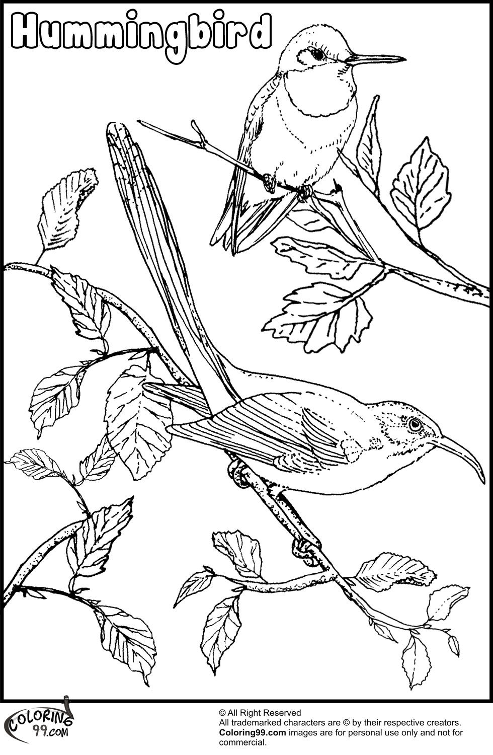coloring pages hummingbirds flowers hummingbird coloring pages team colors pages hummingbirds coloring flowers