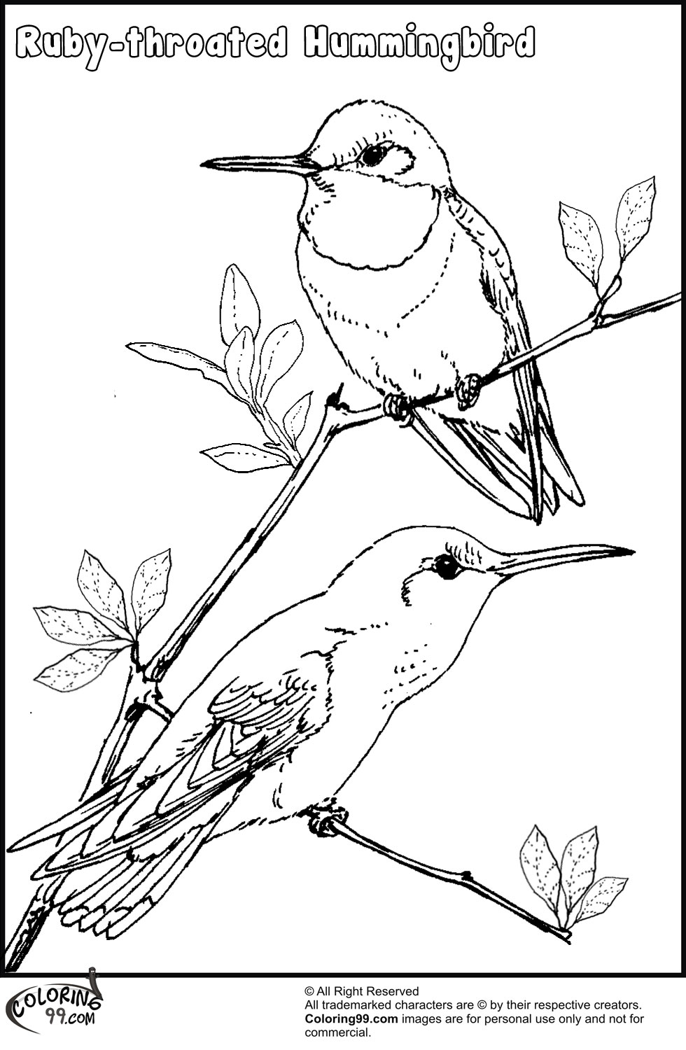 coloring pages hummingbirds flowers hummingbird flower coloring pages coloringstar flowers coloring pages hummingbirds