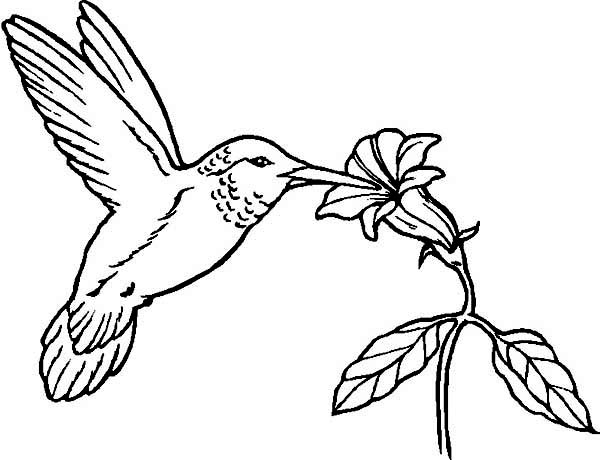 coloring pages hummingbirds flowers hummingbird in flowers coloring page free printable hummingbirds pages flowers coloring