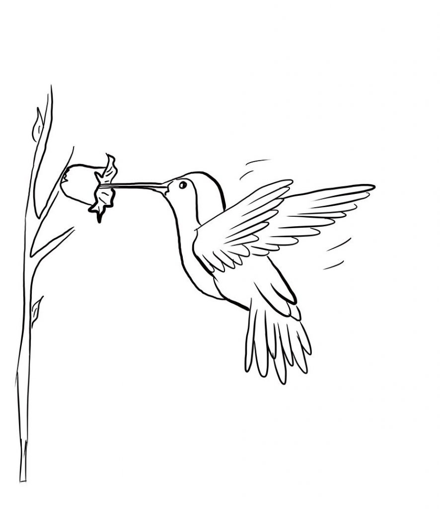 coloring pages hummingbirds flowers hummingbird with flowers tattoo by metacharis on coloring pages hummingbirds flowers