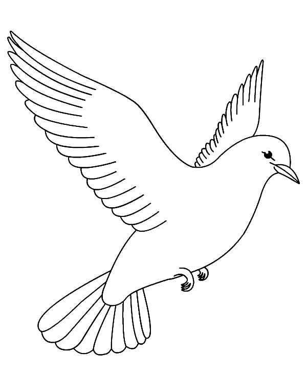 coloring pages of birds flying coloring pages of birds flying coloring pages birds coloring flying of pages