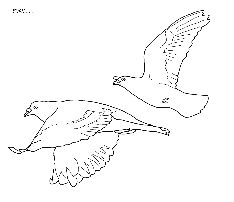 coloring pages of birds flying dibujo de dos garcetas volando juntas para colorear flying of pages birds coloring