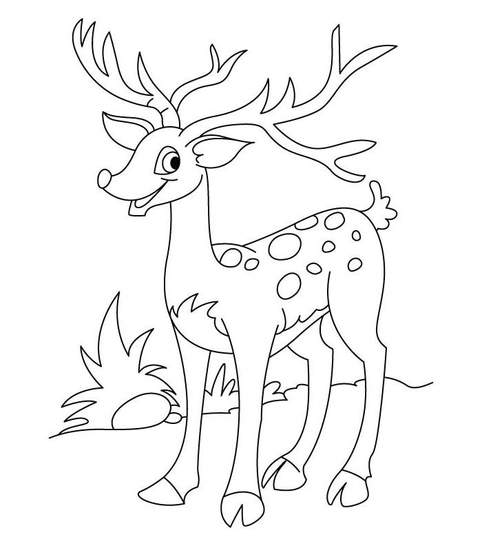 coloring pages of deer 45 deer templates animal templates free premium of coloring pages deer