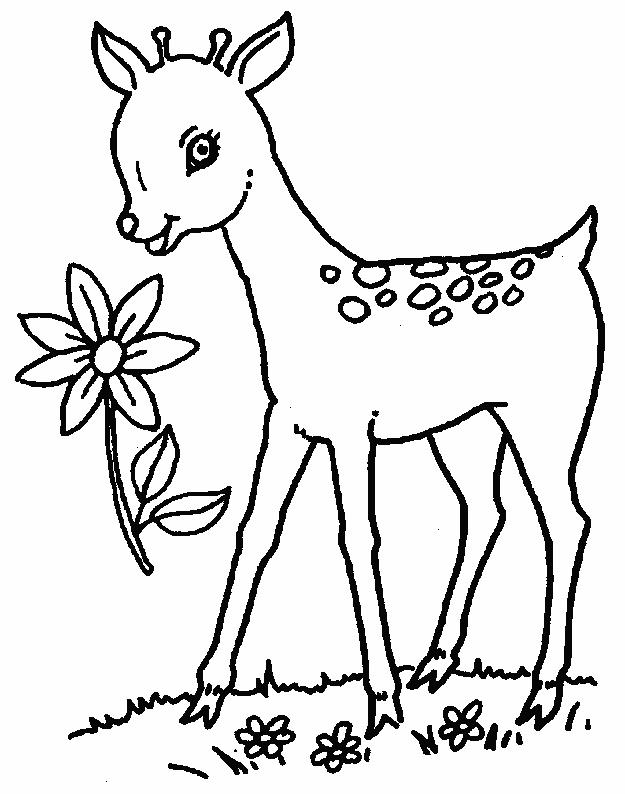 coloring pages of deer baby deer coloring pages printable kids colouring pages of pages deer coloring