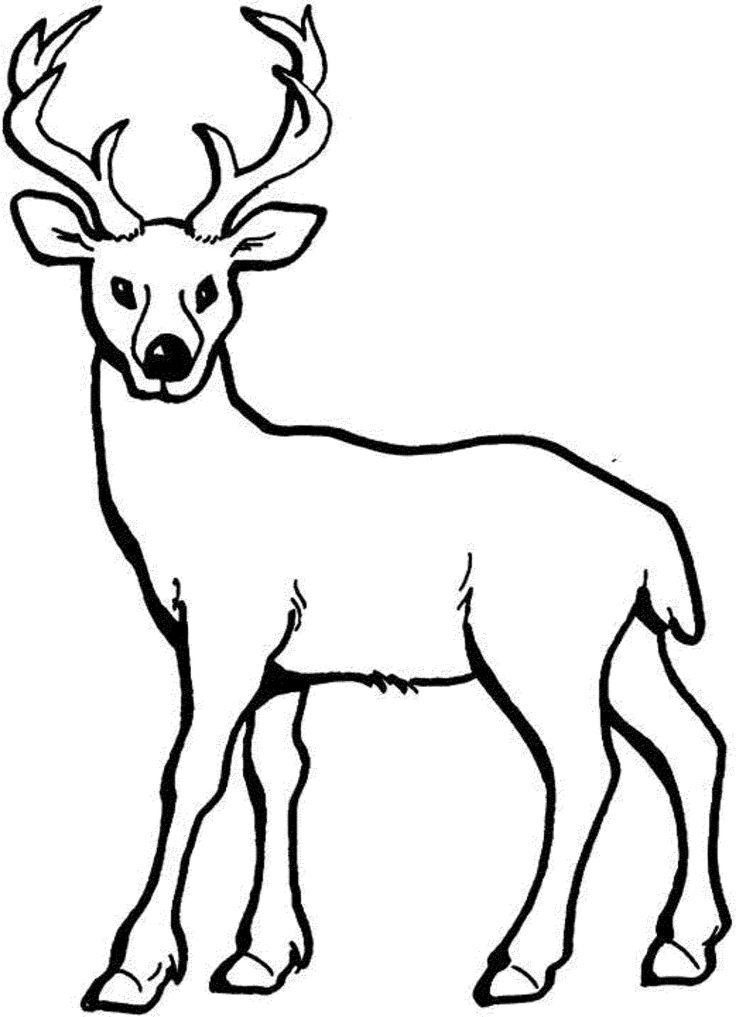 coloring pages of deer coloring pages of deer printable kids colouring pages coloring of pages deer