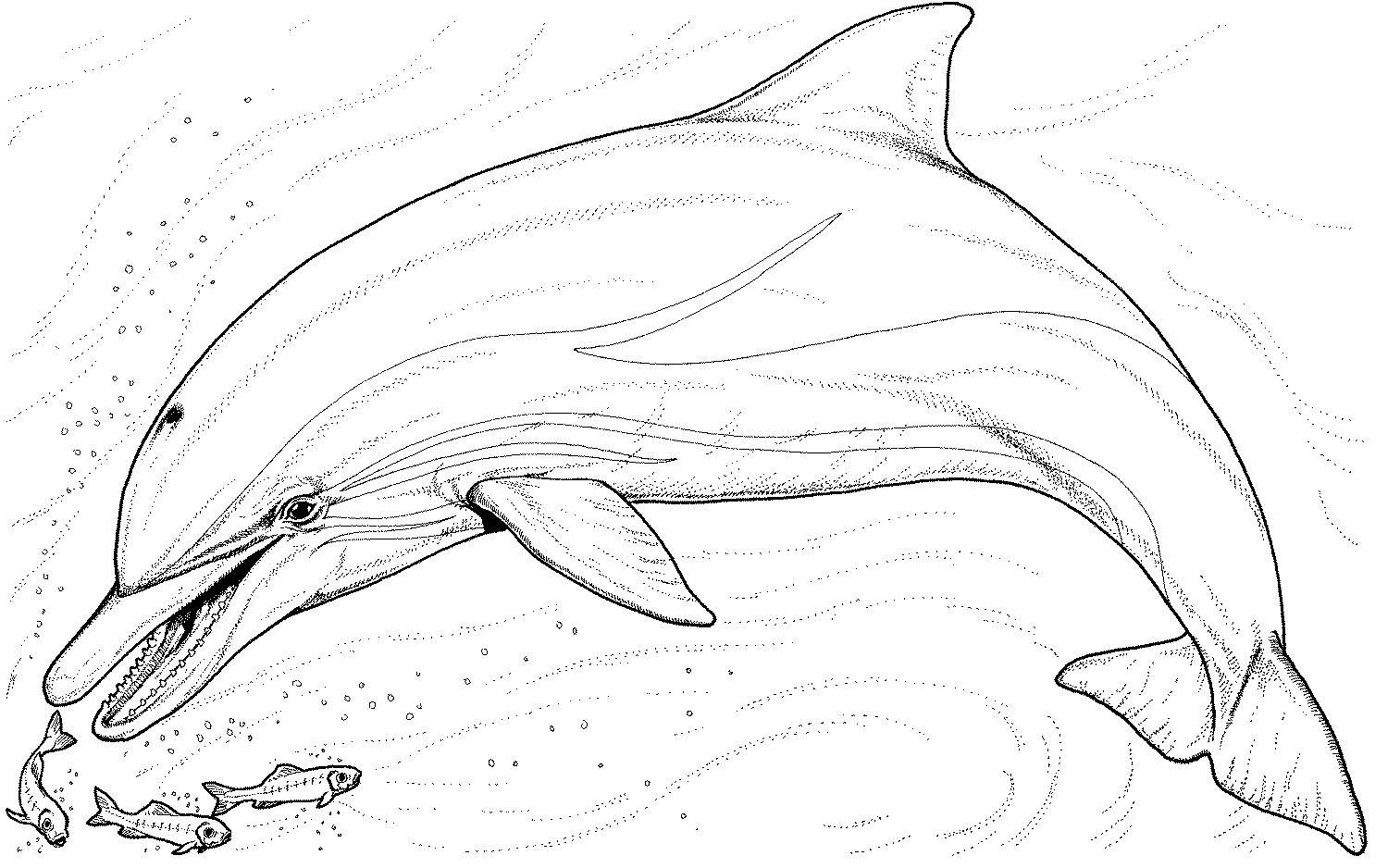 coloring pages of dolphins dolphin coloring pages pages coloring dolphins of