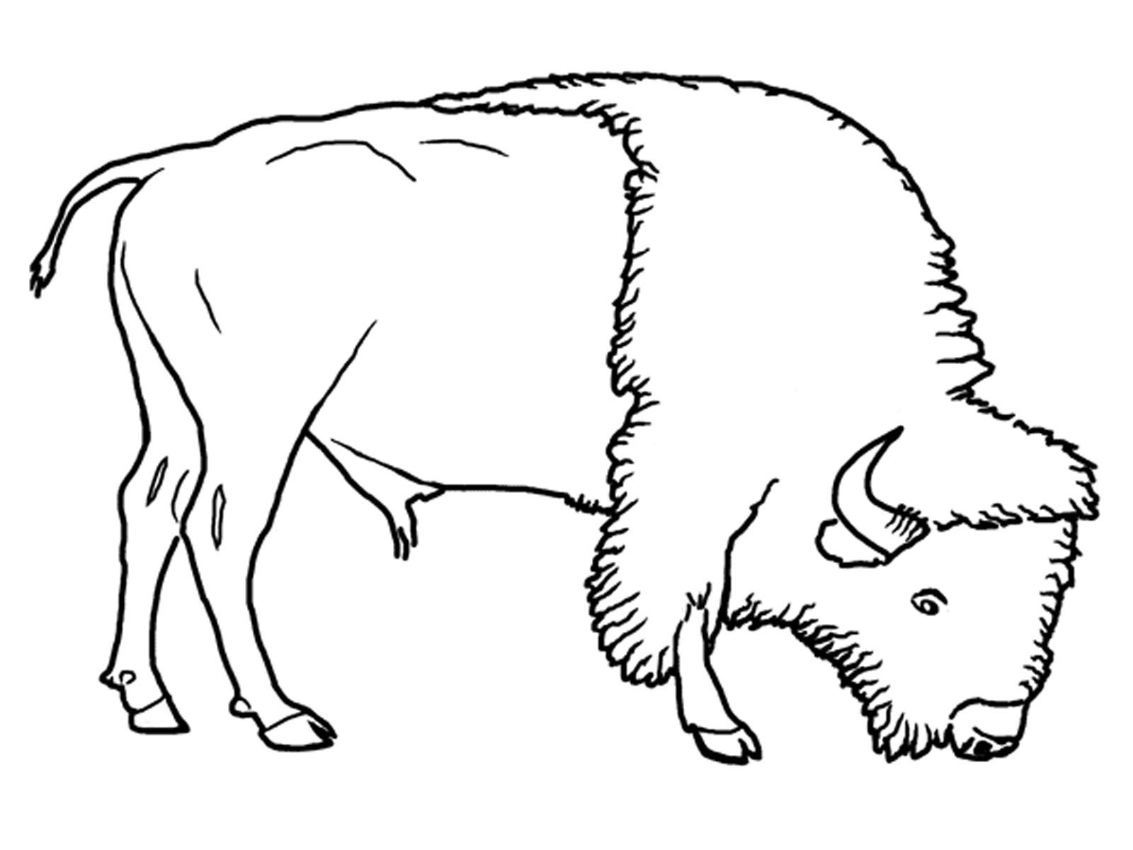 coloring pages of grassland animals animal habitat coloring pages google search animal grassland coloring pages animals of