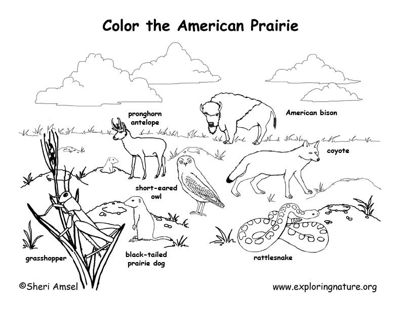 coloring pages of grassland animals grassland animals coloring pages at getcoloringscom coloring of animals pages grassland