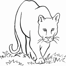 coloring pages of grassland animals grassland animals coloring pages at getcoloringscom coloring pages animals grassland of