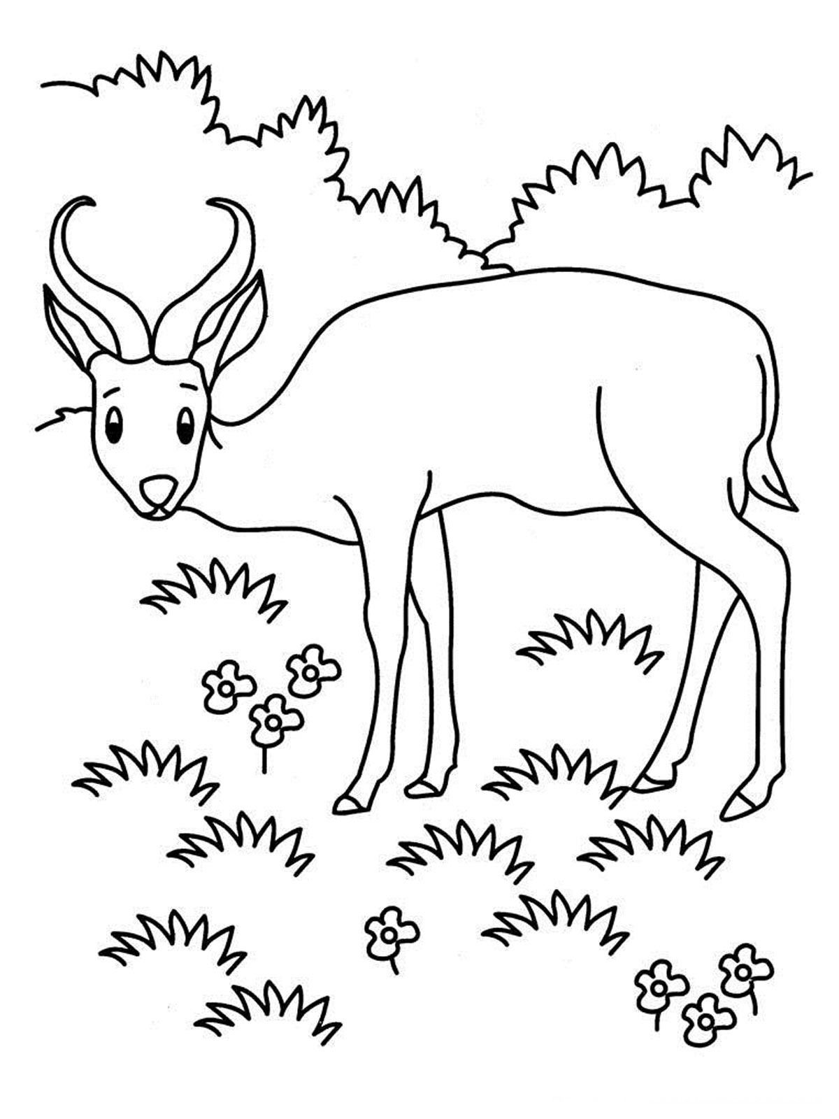 coloring pages of grassland animals grassland animals coloring pages bubakidscom animals of coloring grassland pages
