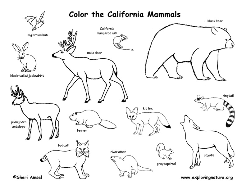 coloring pages of grassland animals grassland animals coloring pages coloring home coloring of pages animals grassland
