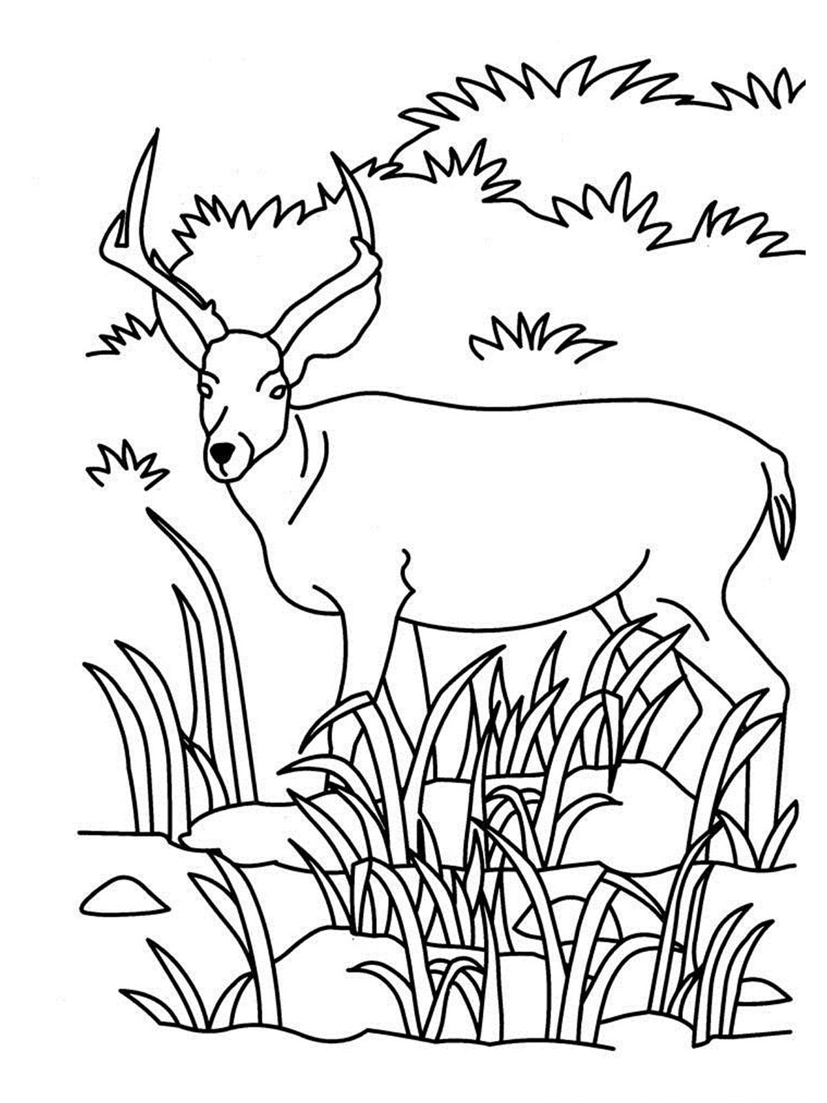 coloring pages of grassland animals grassland animals coloring pages coloring home of pages coloring grassland animals