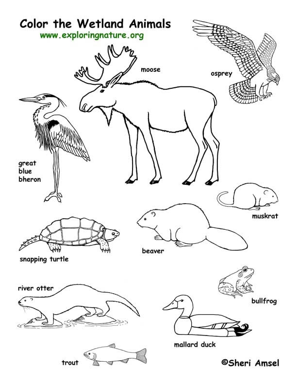 coloring pages of grassland animals grassland coloring pages of grassland animals coloring pages