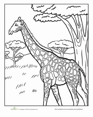 coloring pages of grassland animals grasslands habitat coloring pages coloring pages animals pages of grassland coloring
