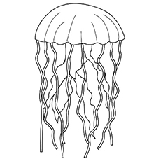 coloring pages of jellyfish beauty jellyfish coloring pagejpg download print coloring of pages jellyfish