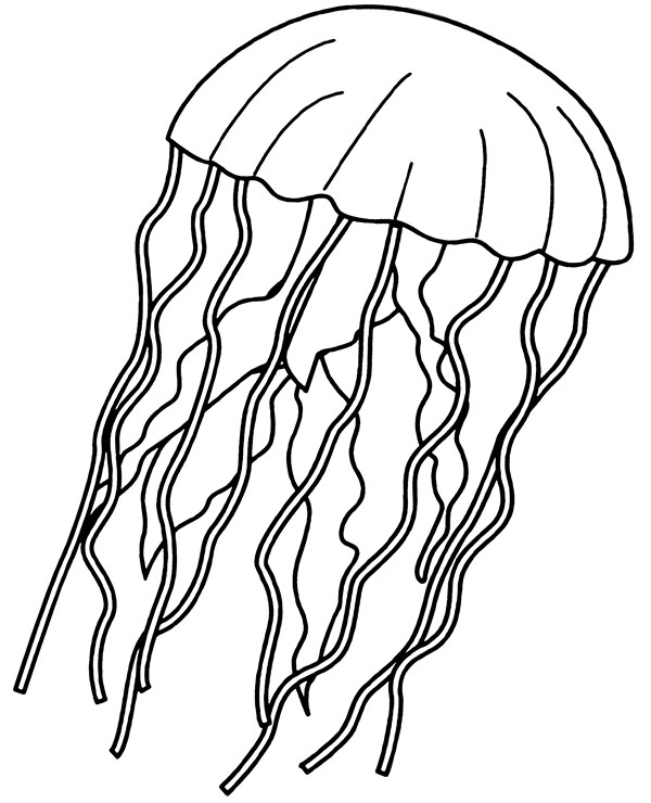 coloring pages of jellyfish jellyfish coloring page for children medusa printable image coloring of jellyfish pages
