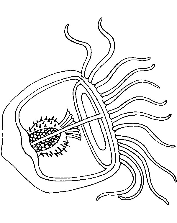 coloring pages of jellyfish mesmerizing beauty 39 fish coloring pages and crafts pages coloring of jellyfish